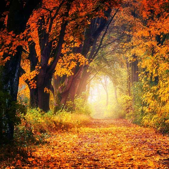 Luce d' autunno